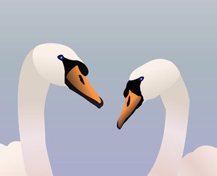 Plakat med svaner - Danmarks nationalfugl svanen